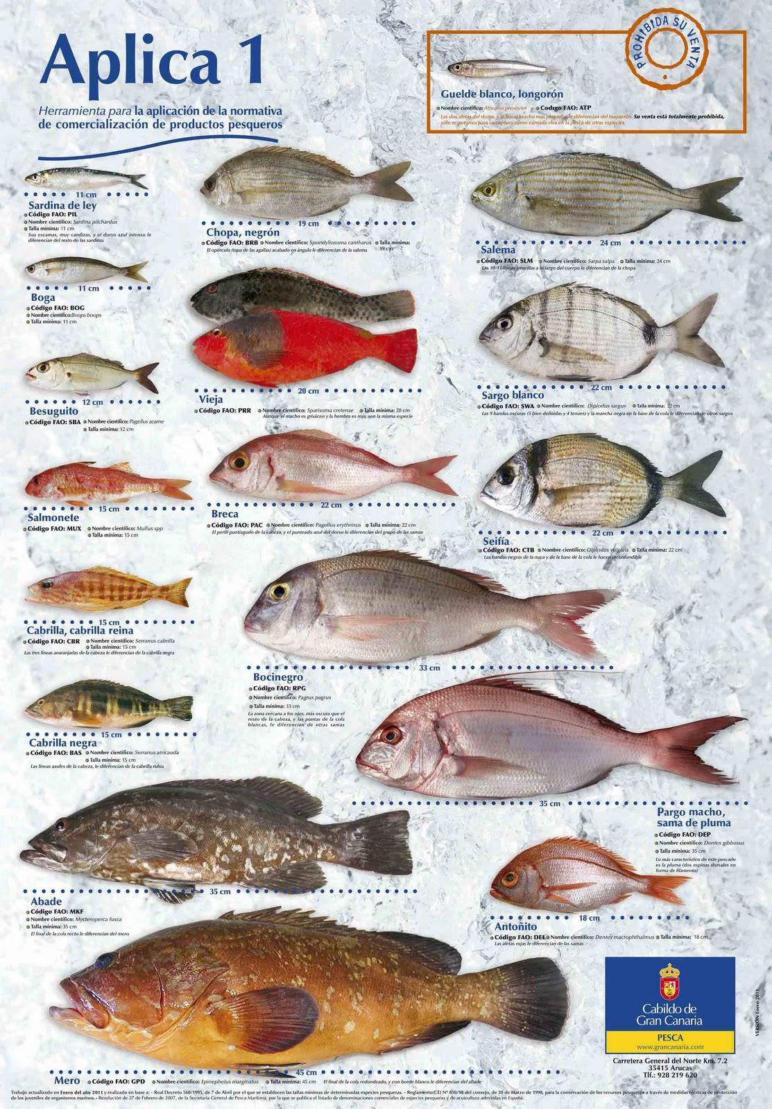 Poster tallas minimas de pesca landive es - Fotos de peces del mediterraneo ...